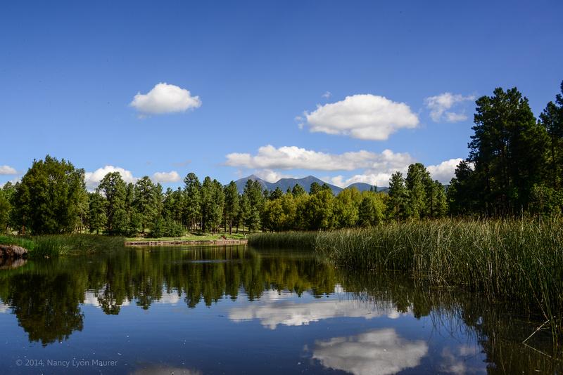 Nancy Maurer Photography Nature And Landscape Flagstaff Arizona Duck Pond August 24 2014